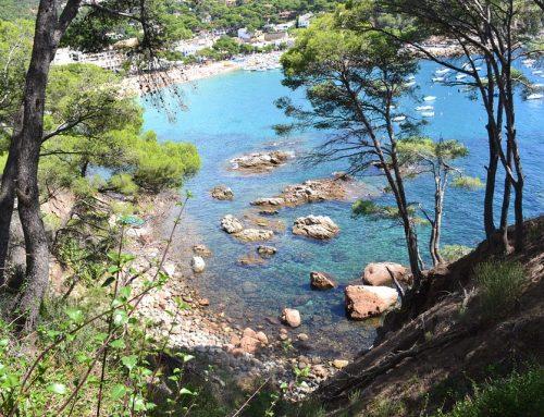 Ce qu'il faut savoir sur le pin maritime