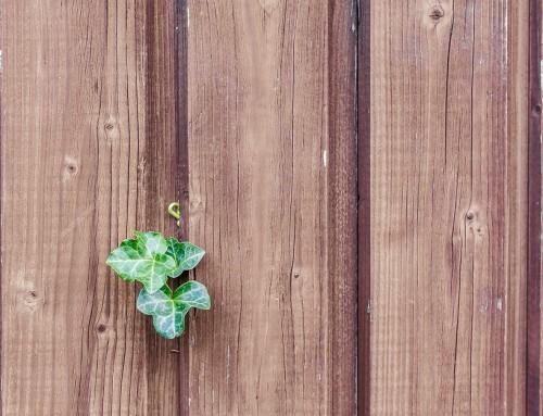 Conseils pour le bois d'extérieur