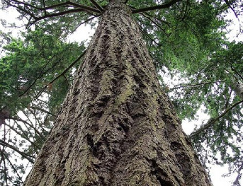 Le point sur les différentes essences de bois