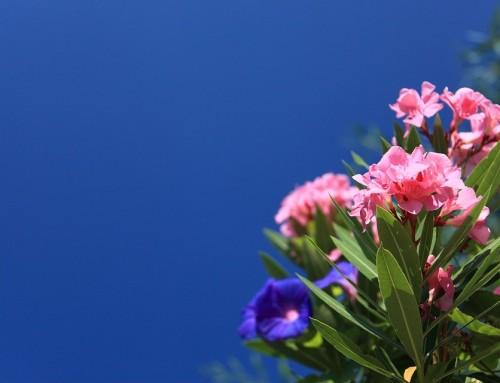 3 idées de rideau végétal pour votre terrasse en bois