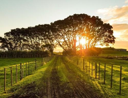 Acheter un terrain pour mettre une maison à ossature bois : les documents à consulter